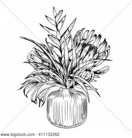 Tropical Bouquet With Protea Flowers In Trendy Vase. Black And White Vector Illustration.