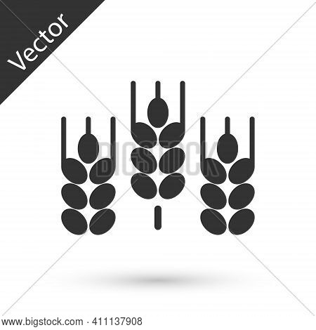 Grey Cereals Set With Rice, Wheat, Corn, Oats, Rye, Barley Icon Isolated On White Background. Ears O