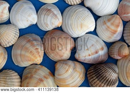 Seashells Background, Seashells On Blue Background, Top View