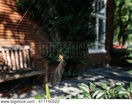 Big Spider On The Net With Dutch House In The Background