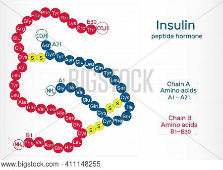 Human Insulin Molecule. It Is Peptide Hormone, Produced By Beta Cells Of The Pancreas, Used For The