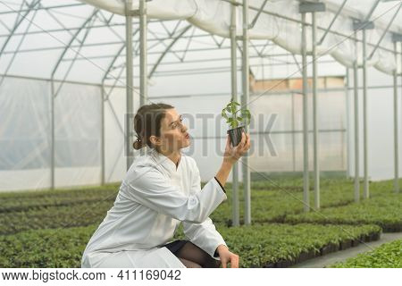 Woman Holding Potted Plant In Greenhouse Nursery. Seedlings Greenhouse.