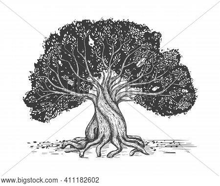 Family Tree Hand Drawn Sketch Print. Genealogical Tree. Stylized Old Olive Tree.