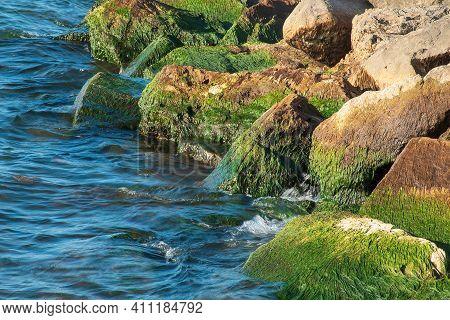 Green Algae Growing On Large Beach Rocks With Blue Lake Water