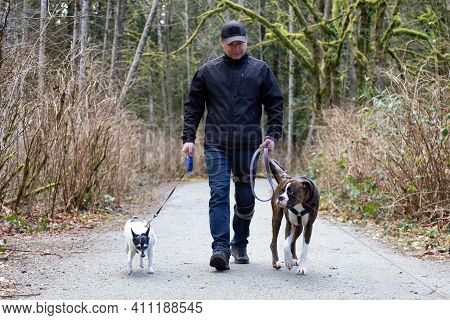 Man Walking Dogs On The Hiking Trail In The Neighborhood Park. Taken In Surrey, Greater Vancouver, B