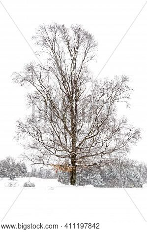 Vertical Shot Of A Bare Tree In The Snow After A Heavy Snowfall.