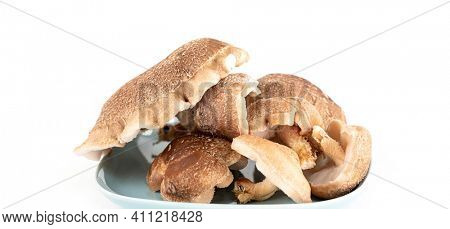 Shiitake mushroom isolated on white background.  It is considered a medicinal mushroom in some forms of traditional medicine