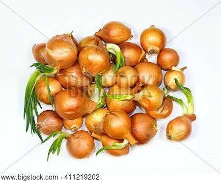 Pile Of Onions On White Background, Flat Lay. Onion Bulbs In Spring, Some Of Them Are Germinating.