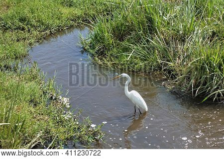 A Stream Flows Through The Green Grass Of The Savanna. Foam And Bubbles On The Surface. An Egret Sta