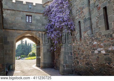 Alupka, Crimea, Russia - April 30, 2019: Purple Wisteria Blooms In Spring In The Vorontsov Palace. C