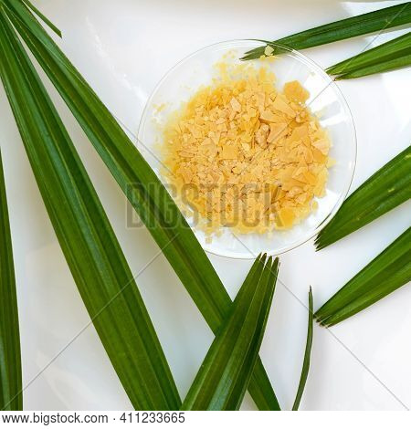Organic Carnauba Wax In Chemical Watch Glass And Broadleaf Lady Palm Leaves On White Laboratory Tabl