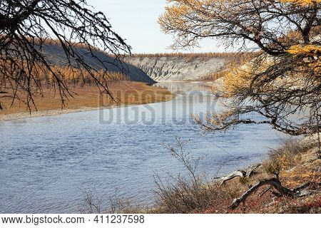 Autumn Day On The Bank Of The Wild Siberian Taiga River. Larch Yellow September Forest Tundra On The