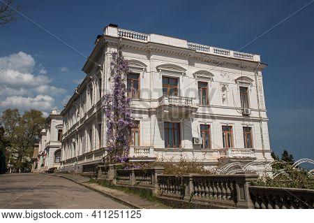 Livadia, Crimea, Russia - April 30, 2019: Purple Wisteria Blooms In Spring In The Livadia Palace. Th