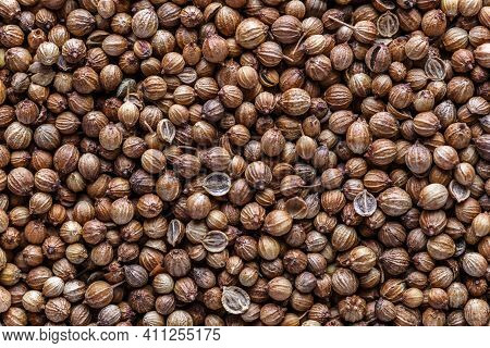 Pile Of Coriander Seeds. A Mixture Of Different Spices Close Up. Textures Of Colorful Spices And Con