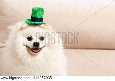 Cute White Dog Pomeranian Spitz In A Green Leprechaun Hat For St. Patrick's Day.