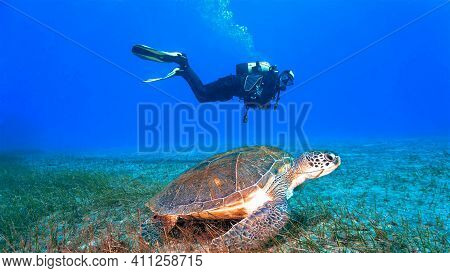 Underwater Photo Of Landscape With A Scuba Diver And A Giant Turtle. From A Scuba Dive At The Canary