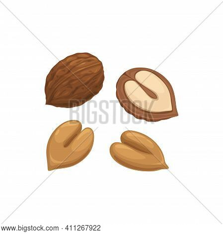 Hazelnut In Hard Shell Isolated Superfood, Peeled And In Shell Isolated Icon. Vector Hazel-nut, Vege