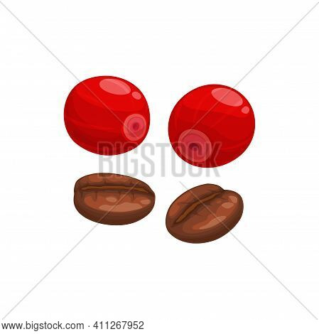 Coffee Beans Roasted And Fresh Berries Isolated Americano Drink Ingredient. Vector Coffee Cherries,