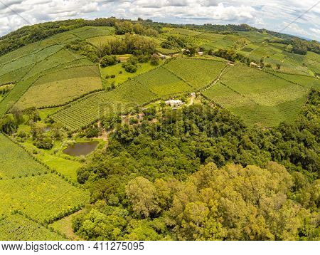 House, Vineyards And Road In Valley