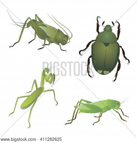 Set With Insects Isolated On White Background. Locust, Japanese Beetle, Grig And Mantis.  Element Fo