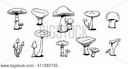 Mushroom Doodle Set. Various Mushrooms Hand Drawn Sketch. Champignon, Chanterelle And Shiitake. . Ve