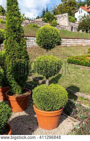 Potted Tree With Three Levels In The Park Of Wilhelmsburg Castle In Schmalkalden, Thuringia