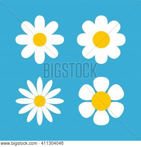 Daisy Chamomile Vector Flower Shape Illustration Icon. Camomile Flower Cartoon Design