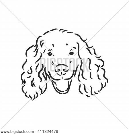 Dog Breed Cocker Spaniel Muzzle, Sketch Vector Graphics Black And White Drawing