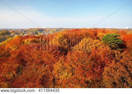 Breathtaking Aerial View Of The Colorful Red, Orange And Yellow Beech Trees In The Nachtegalen Park