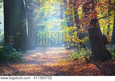 Sun Rays Flowing Through Tall Ancient Golden Beech Trees In The Nachtegalen Park. Forest Floor Of Co