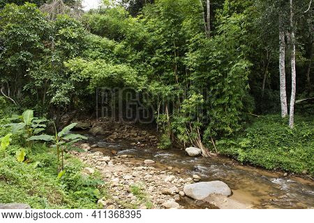 View Landscape Mae Lai Stream And River In Jungle Wild Forest For Thai People And Foreign Travelers