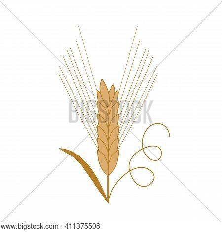 Single Spikelet Of Barley With Leaf And Curl. Hand-drawn Vector. Cereals, Healthy Food, Ecology, Rur