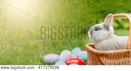 Easter Bunny On Spring Green Grass. Cute Rabbit. Easter Egg Hunt With Pet Bunny. Banner. Happy Easte