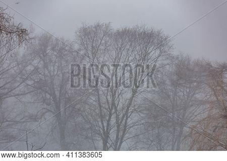 Dry Tree In Thick Winter Fog