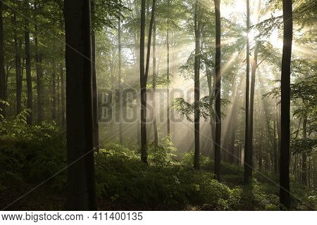 Spring forest sunrise Nature woods sun tree Nature landscape Nature landscape Nature landscape background Nature background Nature landscape Nature background landscape Nature background Nature landscape Nature landscape Nature landscape Nature background