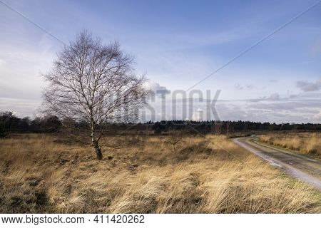 Tree In A Wide Landscape On The Dutch Nature Reserve Strabrechtse Heide Close To Someren In The Prov