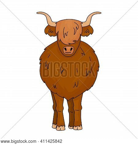 Cartoon Vector Outline Doodle Illustration Of Big Bull Scottish Highland Cow Mother. Isolated Animal