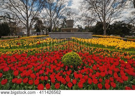 City Flowerbed And Fontan With Beautiful Red And Yellow Tulips. Spring In Crimea. Sevastopol, Crimea