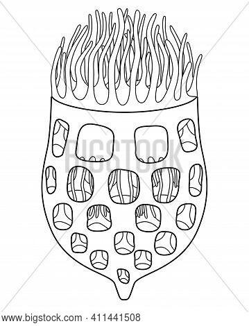 Tintinnid Ciliates - Vector Linear Illustration For Coloring, Tintinnid - Unicellular Eukaryotic Cil
