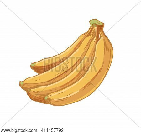 Ripe Banana Cluster Or Bunch Isolated On White Background. Tropical Fresh Yellow Fruits. Hand-drawn