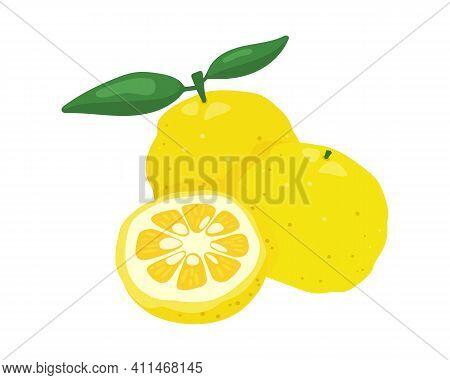 Yuzu Japanese Citron Fruit Vector Illustration Isolated On White Background. Full And Half Citrus Yu