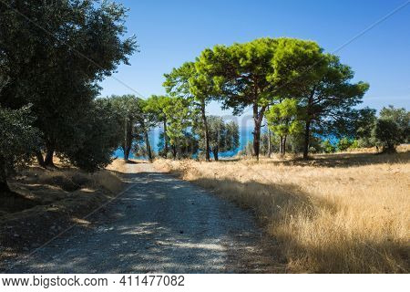 Rural landscape, Nature of Turkey, Dirt road among fields of dry grass, bright green Mediterranean pines stand in the sun, olive trees create shade, Azure blue sea in the distance, Lycian way trail
