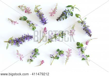 Various Kinds Of Fresh Garden Herbs Isolated On White Background. A Set Of Herbs From Folk Medicine.