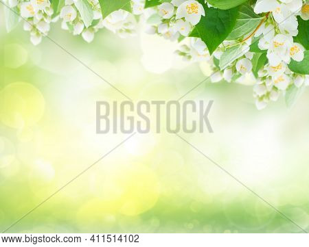 Jasmine Flowers And Leaves Over Sunlit Garden Bokeh Background, Abstract Spring Background With Copy