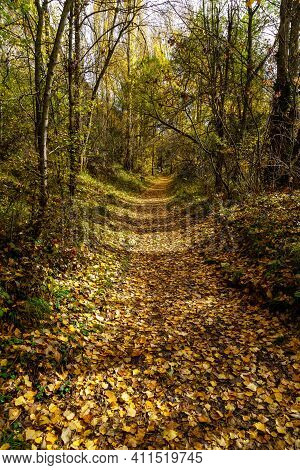 Autumn Landscape. Path In The Forest With Lights And Shadows. Carpet Of Fallen Leaves And Magical An