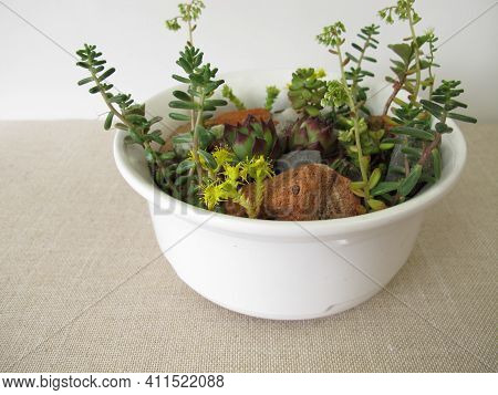 Small Rock Garden In A Planting Bowl, Flower Pot With Rock Garden Plants