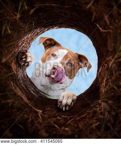 cute dog looking down into a dirt hole that he dug up