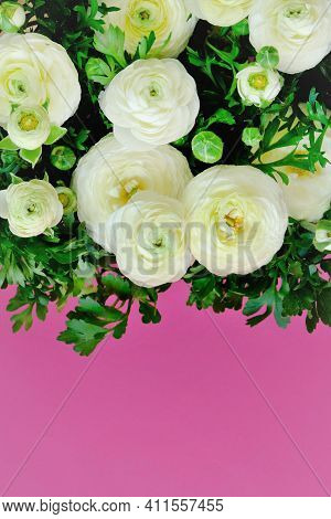 White Ranunculus Flowers. White Buttercups On Fuchsia Background.ranunculus Bouquet.buttercups Flowe