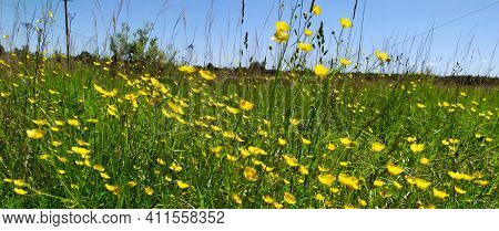A Beautiful Colorful Meadow Of Wildflowers. Summer. Green Meadow In Sunlight. Yellow Flowers On The