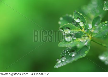 Earth Day. Ecological Concept. Green Leaves With Water Drops On Blurred Bright Green Background.beau